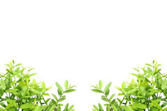 Абстрактный букет листьев Стоковая Фотография