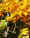 абстрактный вектор иллюстрации листва предпосылки сезон путя пущи падения осени Стоковое Фото
