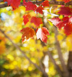 абстрактный вектор иллюстрации листва предпосылки Стоковое фото RF