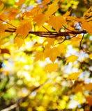 абстрактный вектор иллюстрации листва предпосылки Стоковая Фотография