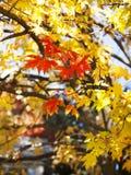абстрактный вектор иллюстрации листва предпосылки Стоковые Фотографии RF