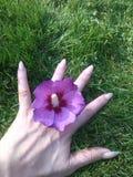 абстрактный вектор иллюстрации hibiscus цветка стоковая фотография rf