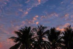 Абстрактный восход солнца силуэта с заводом дерева лист кокоса, красивое небо заволакивает в утро Стоковые Изображения RF