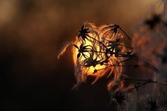 абстрактный восход солнца стоковое изображение rf