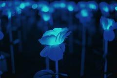 Абстрактный голубой светлый цветок стоковые фотографии rf