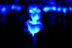 Абстрактный голубой светлый цветок стоковая фотография