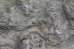 Абстрактный деревянный шаблон Стоковая Фотография