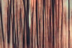 Абстрактный лес Стоковая Фотография RF