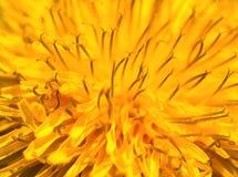 абстрактный желтый цвет макроса цветка Стоковое Изображение