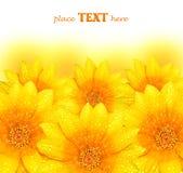 абстрактный желтый цвет цветка предпосылки Стоковое Фото