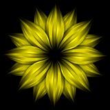 абстрактный желтый цвет цветка черноты предпосылки Стоковые Изображения