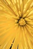 абстрактный желтый цвет цветка Стоковая Фотография