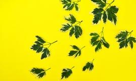 абстрактный желтый цвет предпосылки Стоковое Фото