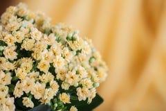 Абстрактный желтый цвет цветет букет, селективный фокус Красивая естественная флористическая предпосылка, всегда модный современн Стоковая Фотография