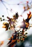 абстрактный желтый цвет цветка Стоковая Фотография RF