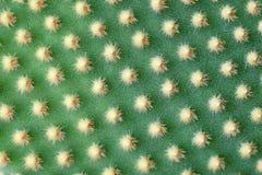 абстрактный завод succulent кактуса textuer предпосылки Стоковые Изображения RF