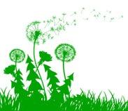 Абстрактный зеленый одуванчик с семенами летания - вектор Стоковое Изображение RF