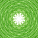 абстрактный зеленый орнамент Стоковая Фотография RF