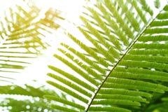 Абстрактный зеленый цвет выходит в природу, солнечный свет через лист на дереве Стоковое Изображение