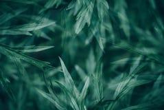 Абстрактный зеленый цвет выходит предпосылка текстуры Стоковые Фотографии RF