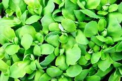 абстрактный зеленый цвет предпосылки выходит завод Стоковые Изображения