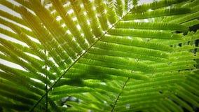 Абстрактный зеленый цвет выходит в природу, солнечный свет через лист на дереве i Стоковая Фотография