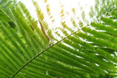 Абстрактный зеленый цвет выходит в природу, солнечный свет через лист на дереве i Стоковое фото RF