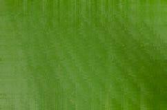 Абстрактный зеленый цвет запачканный как предпосылка Стоковое Фото