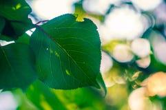 абстрактный зеленый цвет bokeh Стоковые Изображения