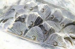 Абстрактный каменный цветок Стоковое Изображение RF