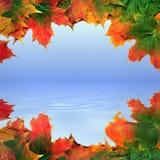 абстрактный клен листьев Стоковые Фотографии RF