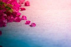 Абстрактный красивый цветок на таблице grunge стоковые фото