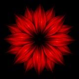 абстрактный красный цвет цветка черноты предпосылки Стоковые Изображения RF