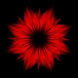 абстрактный красный цвет цветка черноты предпосылки Стоковая Фотография