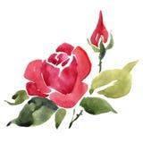 абстрактный красный цвет цветка Стоковая Фотография RF