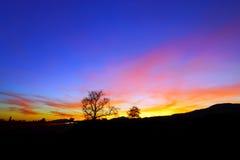 Абстрактный красочный ландшафт захода солнца с силуэтом дерева Стоковые Изображения RF