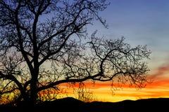 Абстрактный красочный ландшафт захода солнца с силуэтом дерева Стоковая Фотография RF