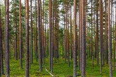 Абстрактный ландшафт древесины сосны Стоковые Фото