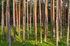 Абстрактный ландшафт древесины сосны Стоковые Изображения RF