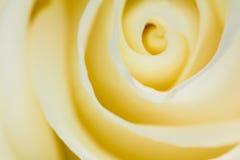 Абстрактный макрос желтых лепестков розы Стоковое Изображение
