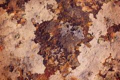Абстрактный мох Стоковое Фото