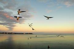 Абстрактный океан предпосылки с птицами Стоковая Фотография