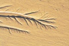 Абстрактный орнамент песка Стоковое Фото