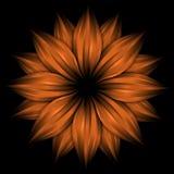 абстрактный помеец цветка черноты предпосылки Стоковые Изображения RF