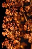 абстрактный померанцовый завод Стоковая Фотография RF