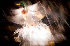 Абстрактный полет утки Стоковое Фото
