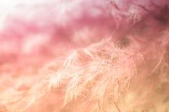 абстрактный пурпур пера предпосылки Всход макроса студии Стоковые Изображения RF