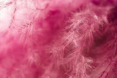 абстрактный пурпур пера предпосылки Всход макроса студии Стоковое Изображение