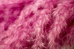 абстрактный пурпур пера предпосылки Всход макроса студии Стоковая Фотография RF