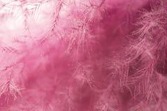абстрактный пурпур пера предпосылки Всход макроса студии Стоковое Фото